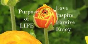 purpose 4